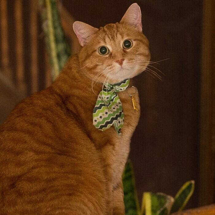 Percy</br> Clinic Mascot photo